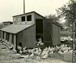 Photo of chicken coup.