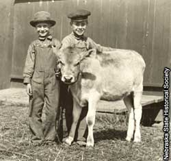 Photo of boys with calf.