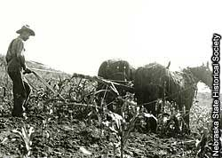 Photograph of farmer plowing a field with horses.